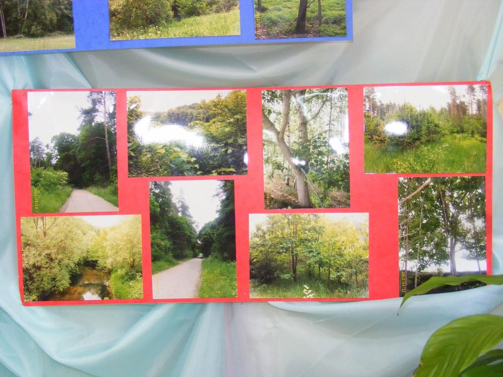 Czysty Las Witamy Na Stronie Sp Wielki Komorsk